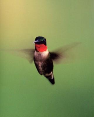 Atunci când visez că zbor