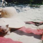 Varianta 1996