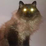 """Utilizări ale pisicii: modul de funcționare """"lanternă"""""""