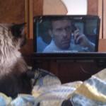 Dr. House agrees: pisica are întotdeauna dreptate