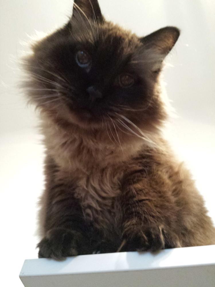 7 lucruri pe care nu le știam despre pisici