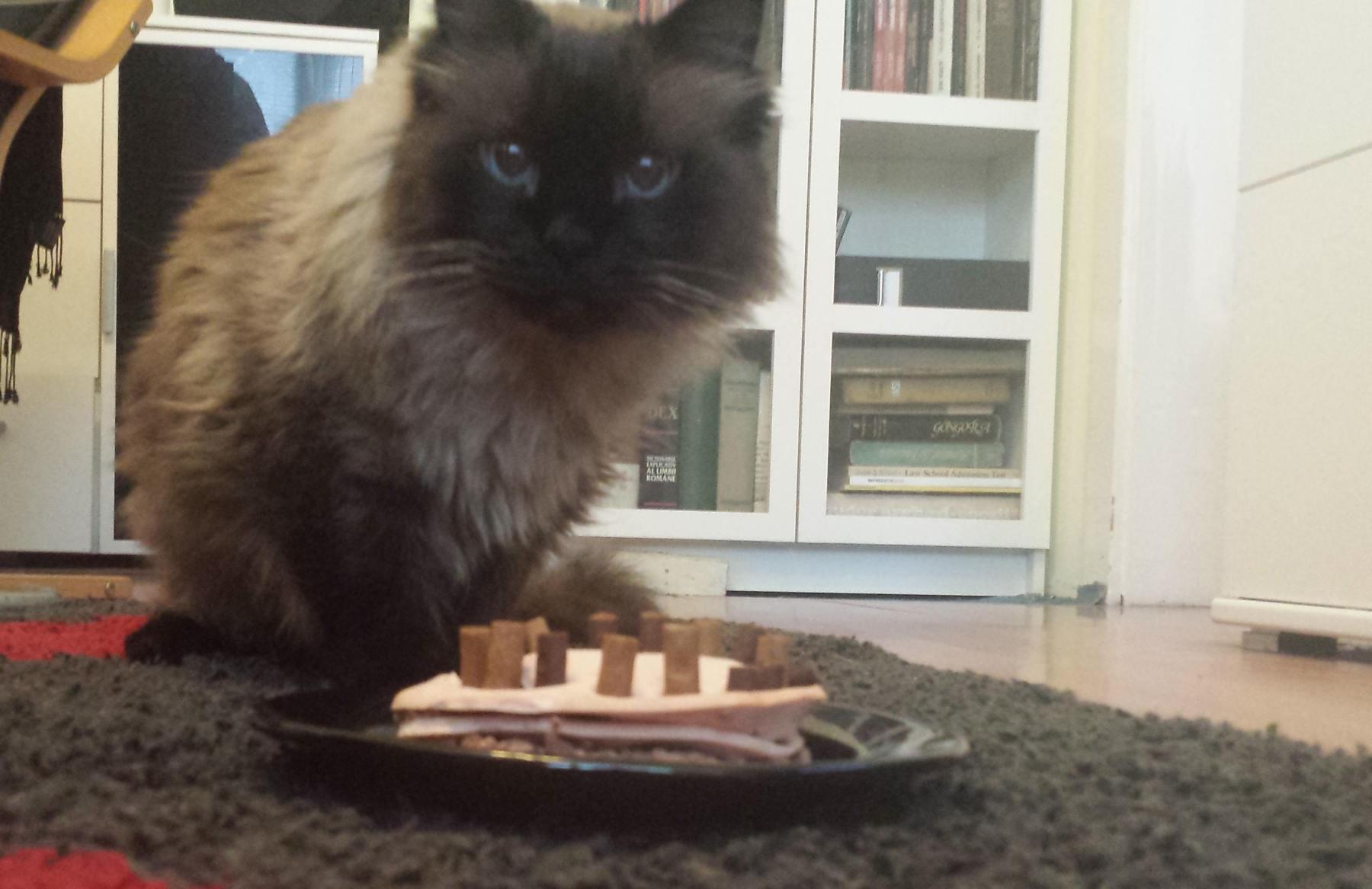 La mulți ani, pisoi! Motanul Mircea face azi 18 ani